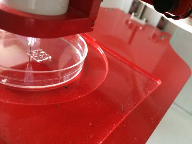 3d Printing Of Eel Kin Collagen Scaffold