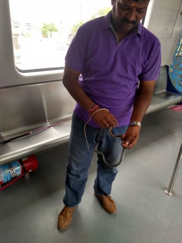 Snake rescued from Metro driver's cabin