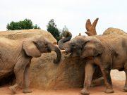 Jumbo kills 18YO girl in Chittoor, mother injured after elephant run amok