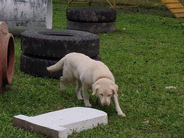 Police teams search for missing German Shepherd dog