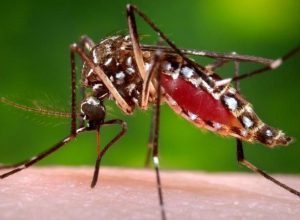 Dengue deaths highest in Maharashtra, Tamil Nadu: National Health Profile report