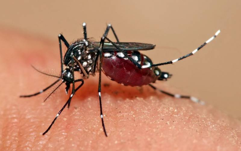 Dengue kills four-year-old in TN; Kindergarten fined one lakh for unsanitary conditions