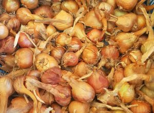 AP government steps in to control soaring onion prices