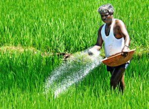 Urea sales soar officially, but farmers facing an acute shortage of fertilisers