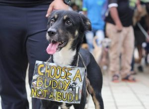 Dogs March for green Diwali in Mumbai's Marine Drive