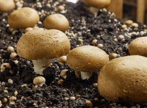 Share over mushrooms leads to murder in Srikakulam