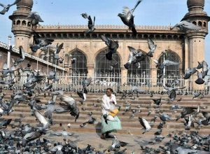 Feeding pigeons in Hyderabad: Nuisance to some, passion to many