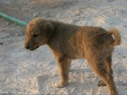 A man rescues a puppy in Syria after US Attack, tweeple pour in their appreciation