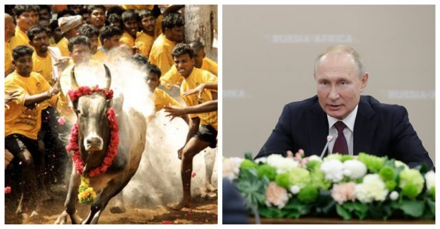Putin to attend Jallikattu in Alanganallur ?