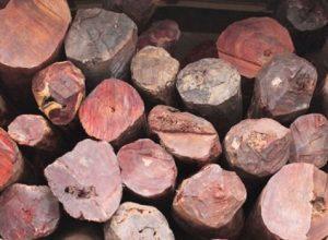 Seven red sandalwood smugglers arrested in Kadapa of AP