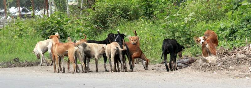 Woman falls to death while escaping stray dogs in Hyderabad