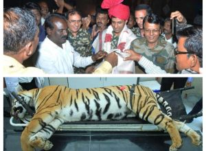 Tigress Avni's killers felicitated on 1st death anniversary