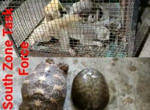 Hyderabad brothers held for smuggling star Tortoise and Loris at Chandrayangutta