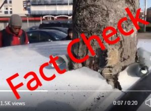 Fact Check: Did a tree grow out of a car overnight?