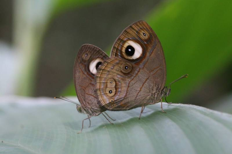 'Kerala' Silent Valley basking in butterflies': Survey