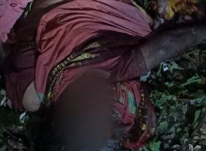 Wild elephants kill female farmer in AP's Vizianagaram