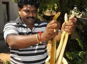 Snake turns against snake catcher in Vizag; Kiran Rokkam admitted to hospital