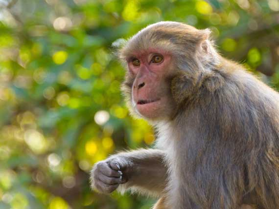 Man misses monkey, shoots cousin in Vizag Agency