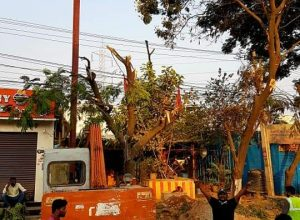 GHMC's reason against translocating trees baffles many environmentalists in Hyderabad