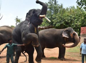 Elephant scare in Vizag Zoo,  children moved to safety