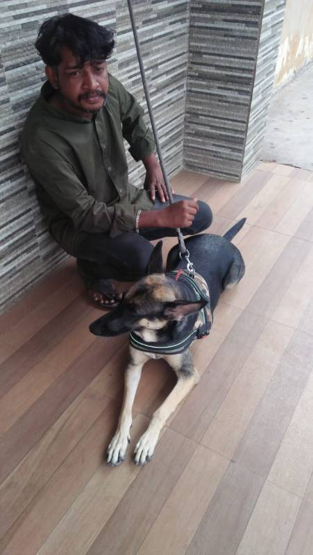 Vizag auto driver steals friends dog sells it for Rs 20,000, nabbed
