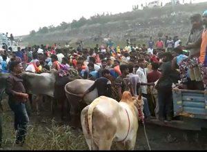 Andhra Jallikattu: Police remain silent spectators as tradition sustains