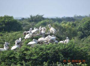 A rare sight of migratory birds at the Flamingo Festival