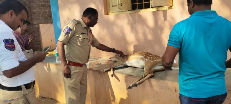 Cyberabad Police rescue injured deer from NH44, hand over to forest officials