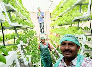 'Hydroponics future of agriculture; its 100% organic, uses less water'