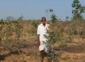 Go Green: Villagers voluntarily plant 80,000 saplings to combat pollution