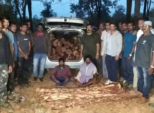 75 logs of red sanders seized, two arrested in Tirupati