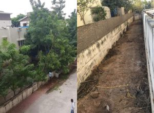 55 fully-grown trees felled in KPHB colony