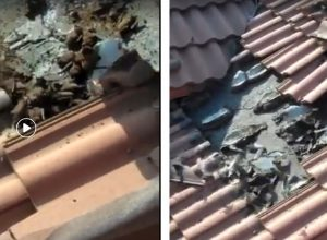 Fact Check: Bats found on roof of a house is not from Wuhan