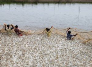 Corona virus makes no dent in India's seafood exports to China