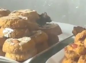 Rat found feeding on biscuits at Fiza hotel in Bahadurpura