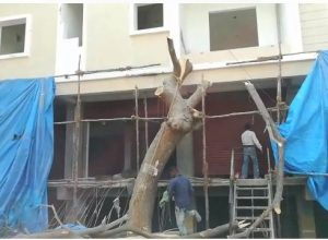 Man fined Rs. 18,150 for cutting tree in Alkapur township
