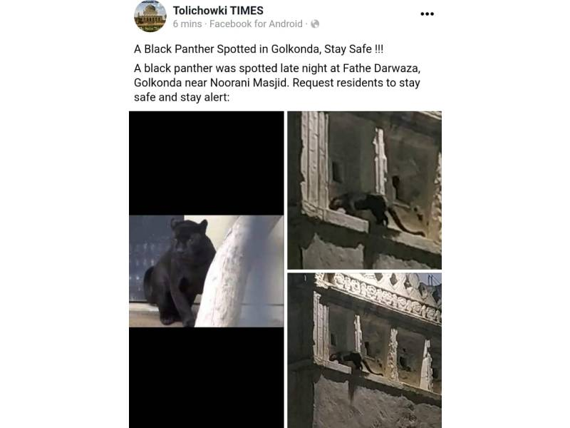 Fact Check: Did locals spot a black panther in Hyderabadf's Golconda