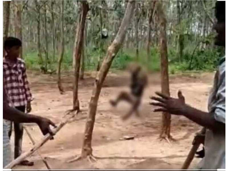 Monkey hanged to death in Khammam, video sparks outrage on social media
