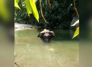 Hyd man announces Rs. 2 L reward for tip-off on pregnant elephant death
