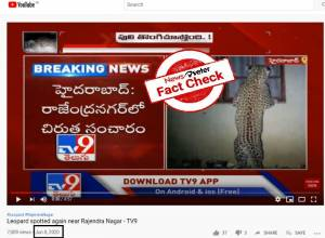 Fact Check: Photo of 'peeping leopard' not from Hyderabad but from South Africa