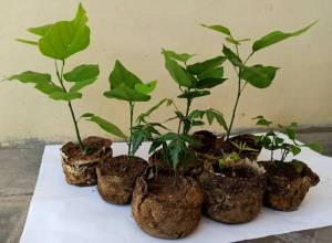 Telangana students make bio-degradable pots from groundnut shells to replace plastic bags in nurseries