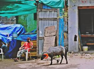 DOs and DON'Ts for Bakrid issued of Telangana Waqf Board