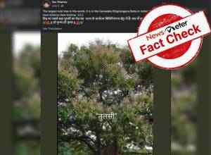Fact check: Viral image of `world's largest Tulsi' turns out to be mango tree.