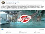 Viral video of giraffes diving into swimming pool is NOT a Real show..But an Animation !!