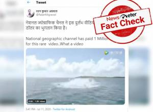 Fact Check: National Geographic channel didn't buy a shark video for 1 million dollar