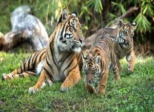 Nehru Zoological Park names cub after martyred soldier 'Santosh'