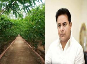 KTR launches Green Space Index ranking for urban local bodies