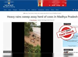 FACT CHECK: Video of cows getting washed away in floods is from Mexico not Madhya Pradesh