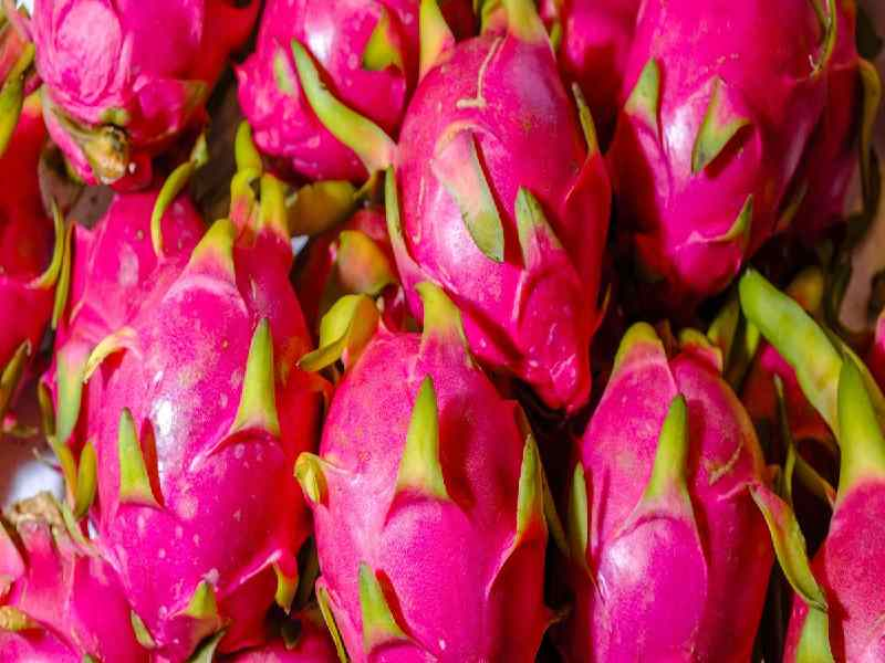 Smiles return as dragon fruit makes debut in Vizag, Vizianagaram