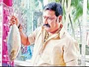 Dwindling catch makes Pulasa prices soar high